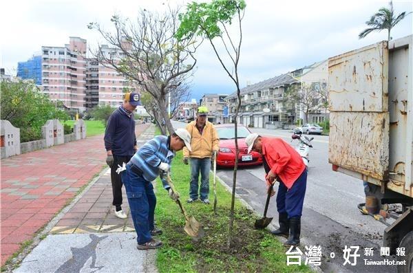 綠化市容 花蓮公所補植行道樹