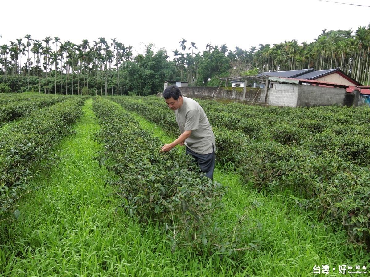 有機變商機 花蓮縣推出有機農業體驗行程