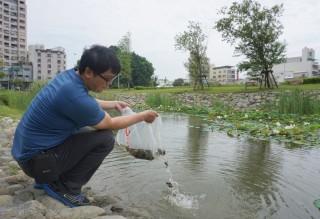 台南紡織總部及南紡購物中心聯手展開防疫大作戰,戶外滯洪池施放兩百隻蓋斑鬥魚防蚊。