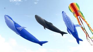 風箏飛上天 大草皮上全家開心追逐風