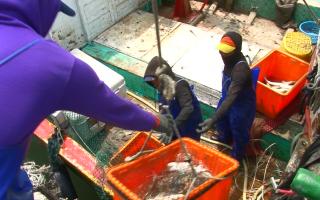 魚鱻節推廣南寮漁獲 新鮮豐富在本地