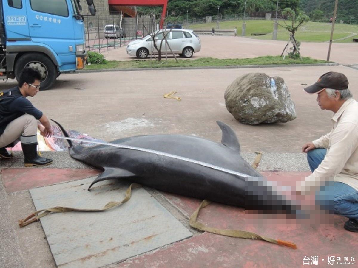 瓶鼻海豚擱淺和平島死亡  送北市動物園採樣分析