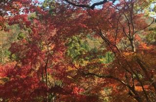 日本九州楓葉美景
