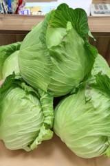 農糧署鮮享農YA臉書粉絲頁推出高麗菜宅配到府免運費優惠