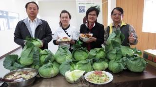 高麗菜進入盛產期 農糧署推出線上銷售免運費宅配到府