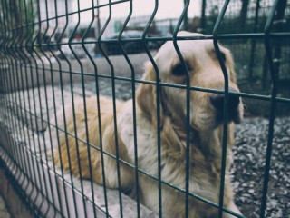 street-dog-1057216_960_720