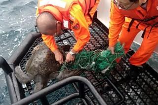 蘇澳海巡隊員為欖蠵龜割除漁網。〔圖/蘇澳海巡隊提供〕
