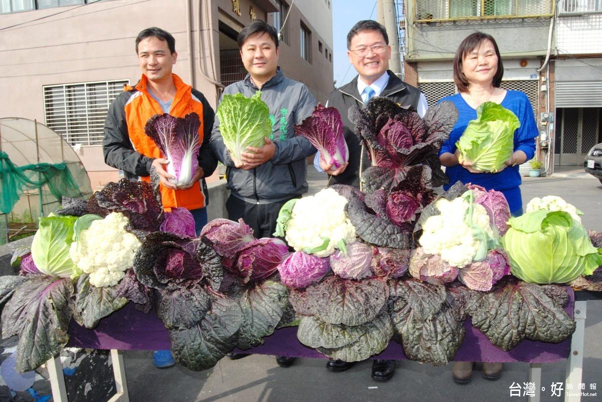 「紫色白菜」吸引民眾搶購 每顆市價高達100元