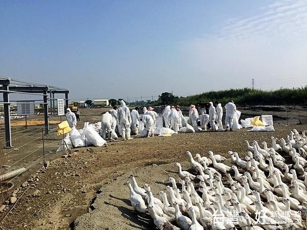 12天5爆 雲縣全面加強防堵禽流感