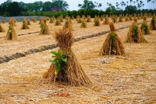 大陸冷氣團來襲 中區農改場呼籲農民做好防寒管理措施