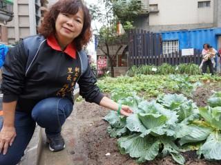 里長薛純良將髒亂空間改造為「複合式菜園」,種植蔬果供長者共餐加菜。(圖/記者黃村杉攝)