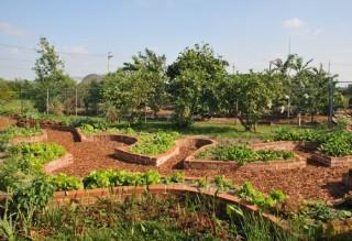 溪海幼兒園的「鑰匙孔水道菜園」。