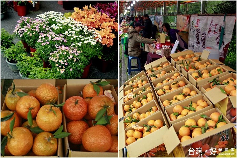 宜縣桶柑花卉農特產促銷 泰山路開賣啦!