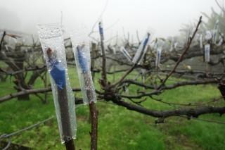 農糧署籲農友防寒,守護作物。