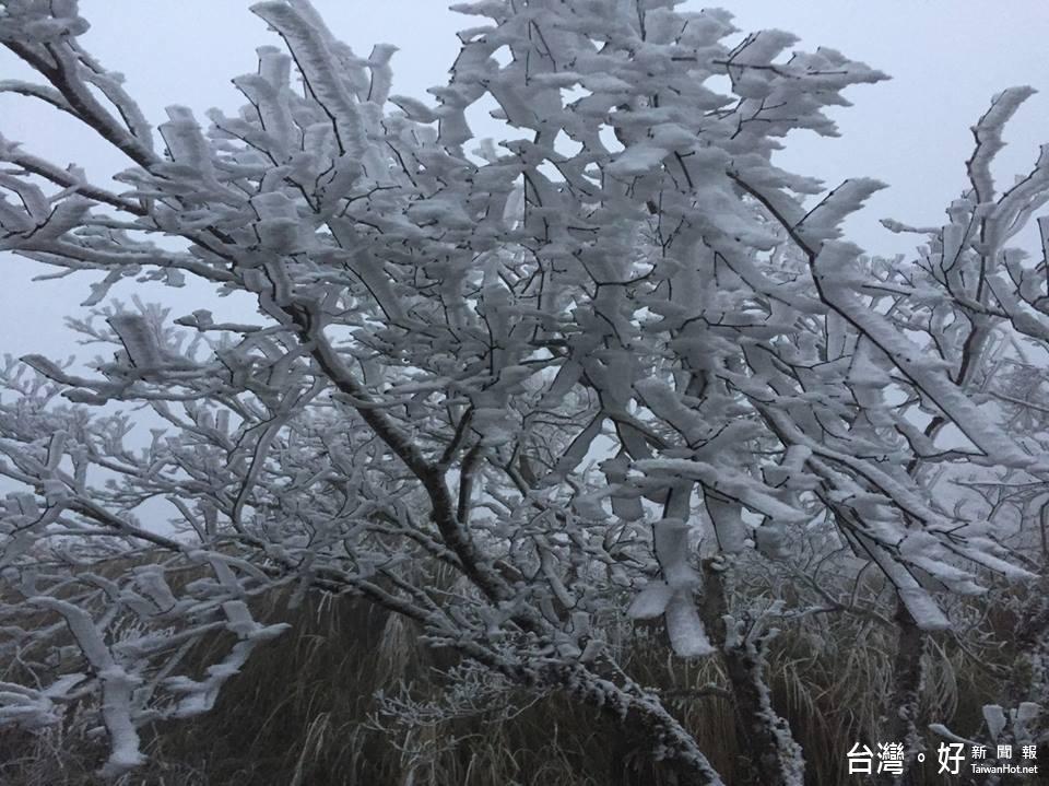 霧淞清晨-3度 宜蘭太平山下雪了~