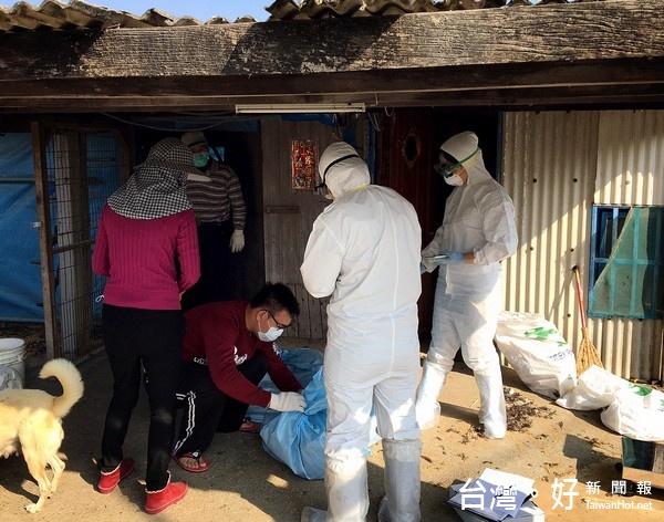 防禽流感視同作戰 北港警加強家禽棄置通報