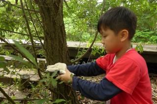 小朋友學修枝。(圖/羅東林管處提供)
