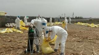因花蓮縣玉里鎮三民里一鴨場又檢出H5N6新型高病原禽流感,因此農委會宣布自11日0時起,對花蓮地區的鴨鵝採取移動管制,只能在花蓮縣內就地屠宰,不能運往其他縣市。(圖/資料照片)