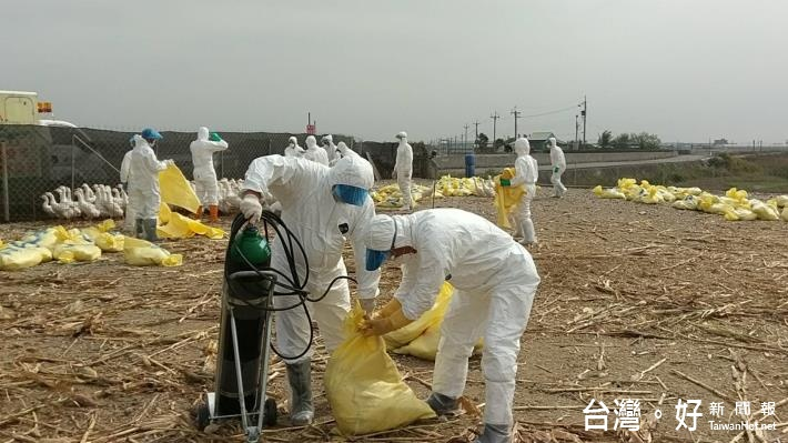 花蓮鴨場再現H5N6 農委會宣布11日0時起花蓮水禽移動管制
