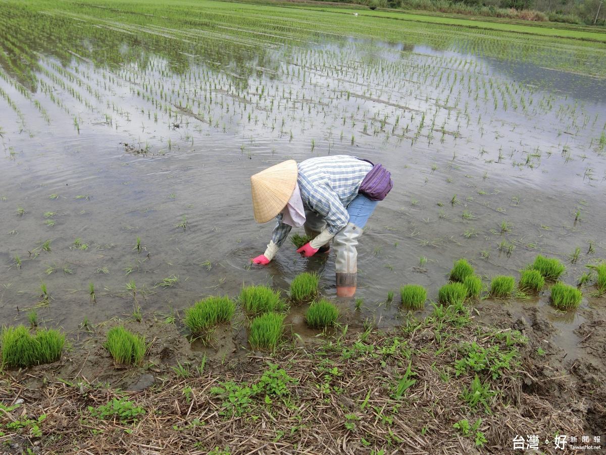 結合體驗歷史人文及景觀特色 花蓮農業旅遊創造新元素