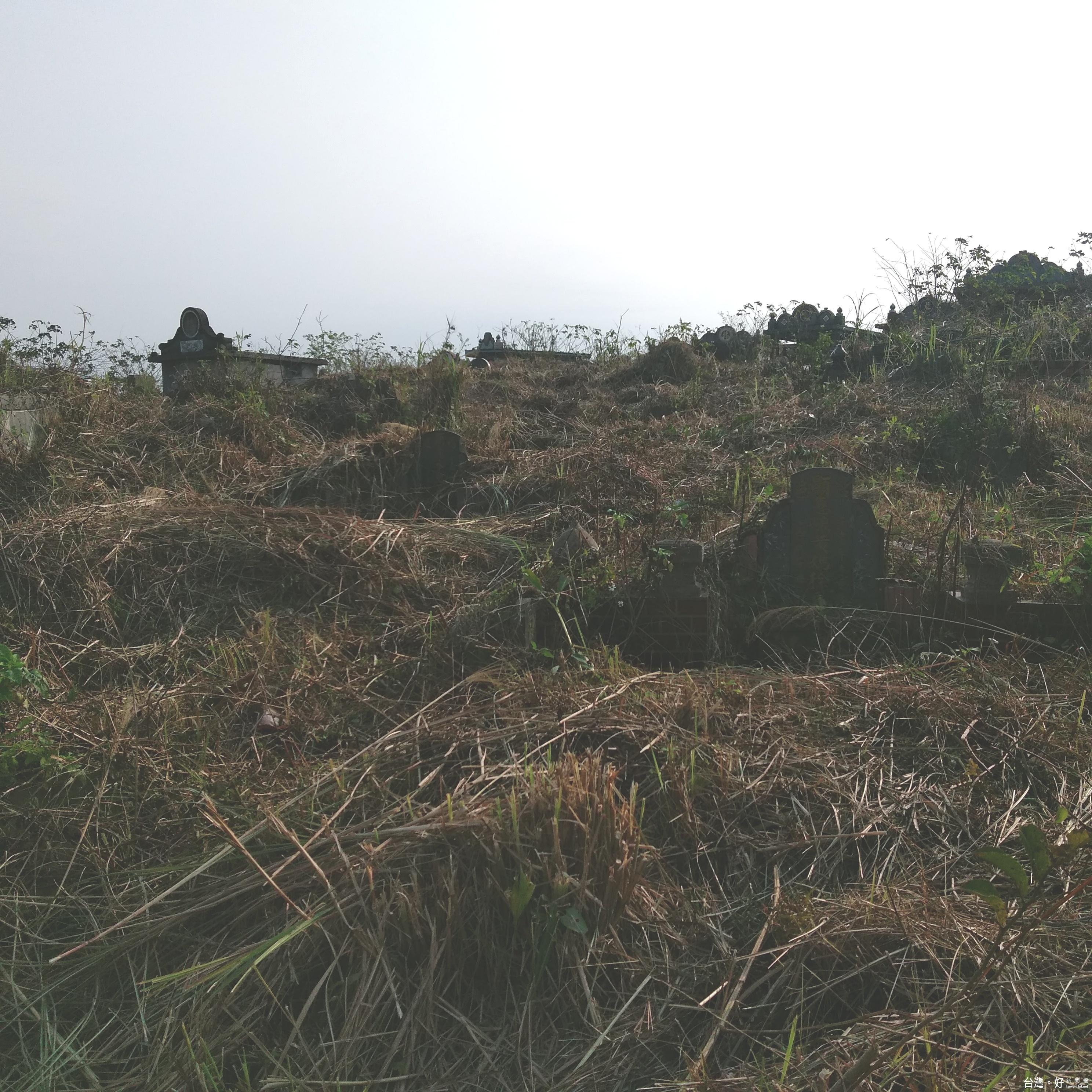 讓掃墓民眾更便利 大溪清明除草發包