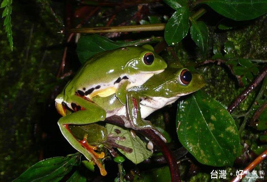 華山生態復甦賞夜體驗 蜘蛛蛙鳴螢光實境導覽