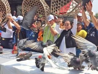 嘉義縣為期約一個月賽鴿笭義竹鄉鴿笭文化季起飛