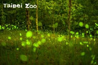 2017「世界地球日」,和動物園一起點亮希望。(圖片來源/台北市政府)