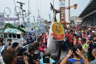 今年屏東縣黑鮪魚文化觀光季展開以來,「第一鮪」已確認是東港籍漁船「德鴻發號」於4月20日捕獲,重達231.4公斤。(圖/屏東縣觀光傳播處)