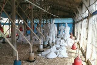防疫人員致力投入動物疫情勤務,令人敬佩。(圖/動保處)