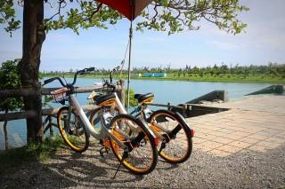 台東推出oBike無樁共享自行車 隨處租借單日使用人次破千