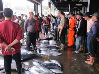 成功漁市場拍賣(圖/台東縣政府新聞傳播科提供)