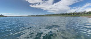 游客遭外來魚種「泰國鱧」咬傷 台東活水湖緊急封閉