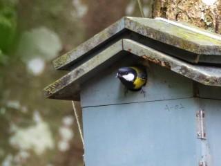 奧萬大鳥巢箱監測計畫,是目前國內鳥類繁殖參數監測累積最久的一項研究。