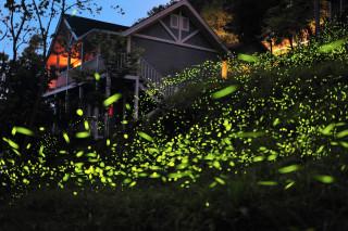 梅山鄉螢光大爆發,飛舞的點點綠光讓學童們驚喜連連〔圖一/嘉義縣文化觀光局提供〕