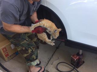 警方經細心慢慢撐大縫隙,終於將貓咪救出脱困。