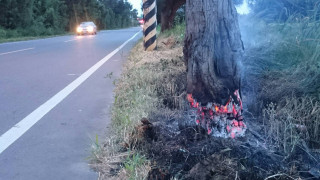 警消發現一個人環抱的枯樹幹已經燒毀2分之一。