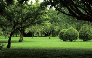 大安森林公園(圖/台北市政府觀光傳播局提供)