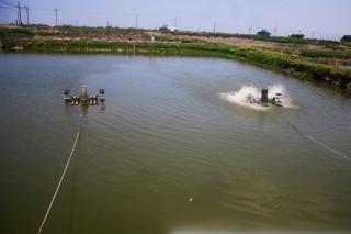 全球首張參數型養殖漁業保險 降雨量達標即理賠