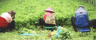 蔬菜的故鄉「西螺」。(台灣好新聞資料照)