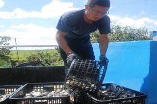 台南市新漁民王信憲笑著說,現在不是擔心客源問題,是煩惱沒有充足的吳郭魚貨源賣給客戶。(圖/記者黃芳祿攝)