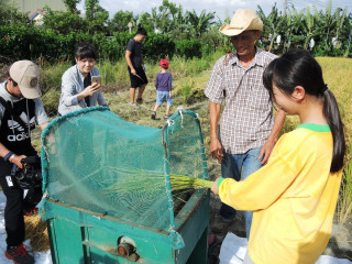 推動食農教育 溪州鄉師生生態農田辛苦收割慶豐收