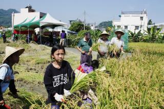 小朋友學習割稻,認識食物的源頭,並體驗農趣。