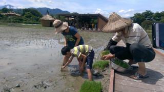 和平快樂田園農趣無窮,親子體驗插秧。〈記者吳素珍攝〉