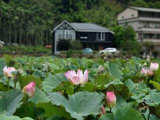 雙溪環境優美,空氣清新,水質又乾淨,是大台北地區的後花園,還有美麗的荷花景色