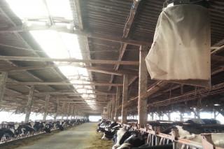 台南市動保處籲養畜禽場注意環境衛生,整理周邊環境。
