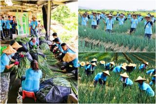 宜蘭農業專業訓練之青蔥生產實作。(圖/蘭陽農業發展基金會提供)