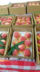 復興區水蜜桃甜美多汁,此時品嚐正是時候,市府特辦水蜜桃之夜促銷,希望為果農帶別更大的收益。(記者陳寶印攝)