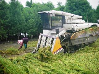 農委會推出水稻保險 讓農民農作多一層保障