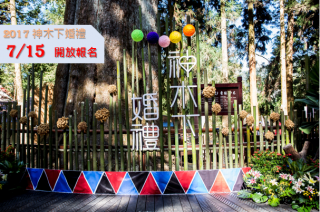 全臺最浪漫森林婚禮 2017阿里山神木下婚禮7月15日起開始報名